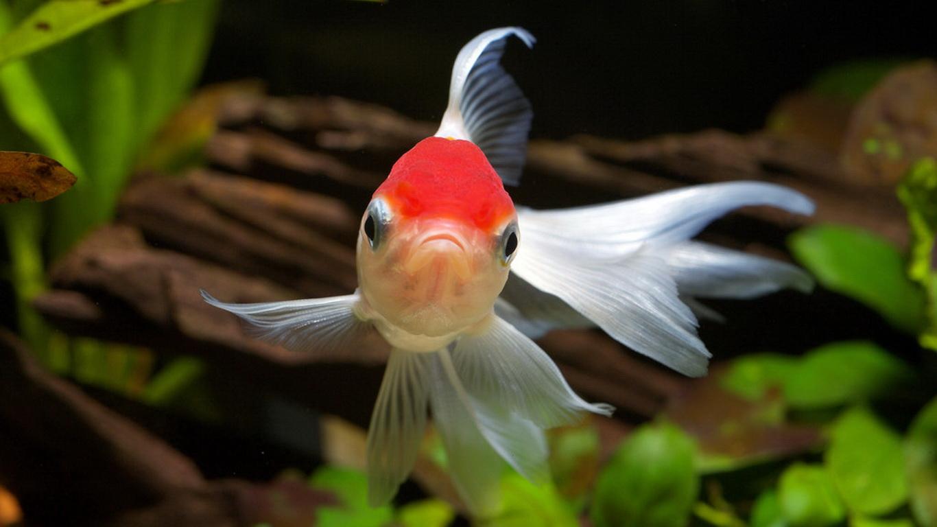 How to setup an autoresponder for Postfix with Goldfish